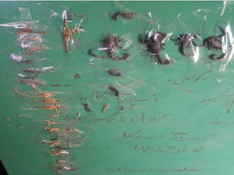 هم نشینی دانش آموزان و عقرب ها در یک روستای ایذه خوزستان (+عکس)