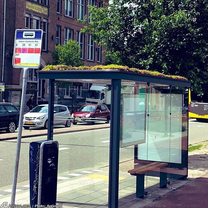 اوترخت؛ از ایستگاه اتوبوس برای زنبورهای عسل! (+تصاویر)