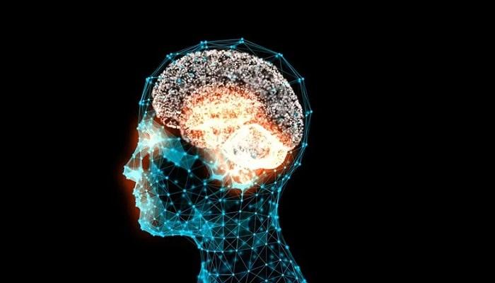 گلوتامات؛ یک انتقال دهنده عصبی کلیدی در مغز