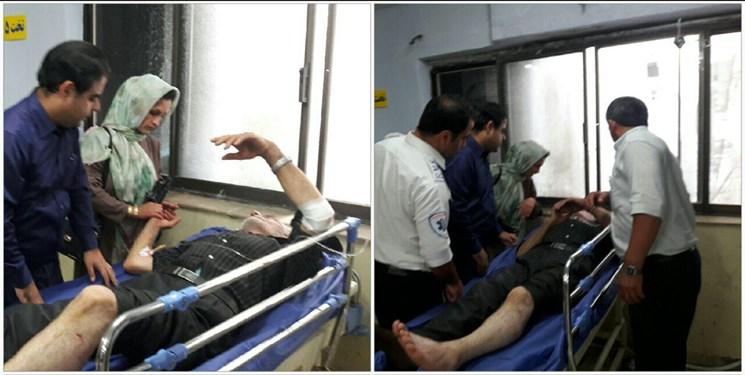 حمله خرس به چوپانی در بابل/ اعزام مجروح به بیمارستان (+عکس)