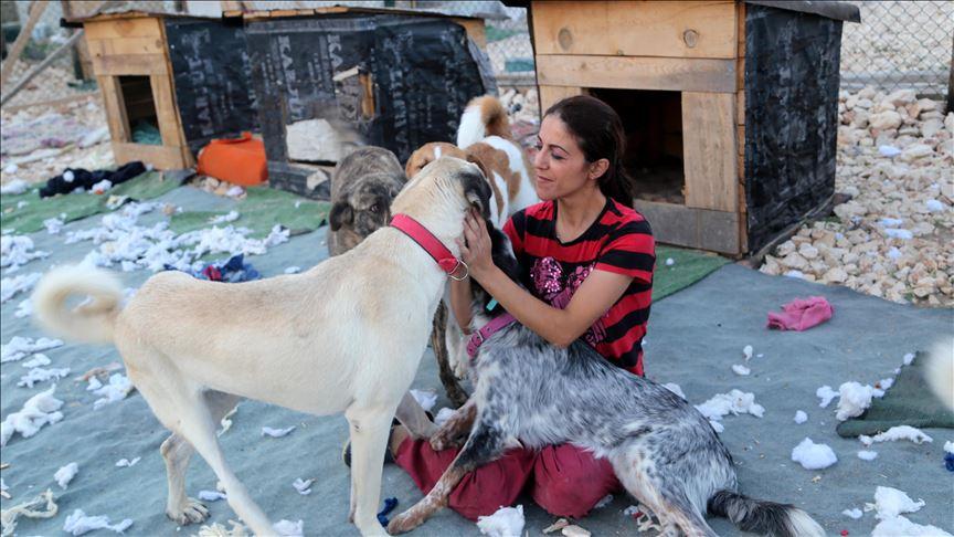 نگهداری از سگهای مصدوم توسط یک حیواندوست اهل ترکیه (عکس)