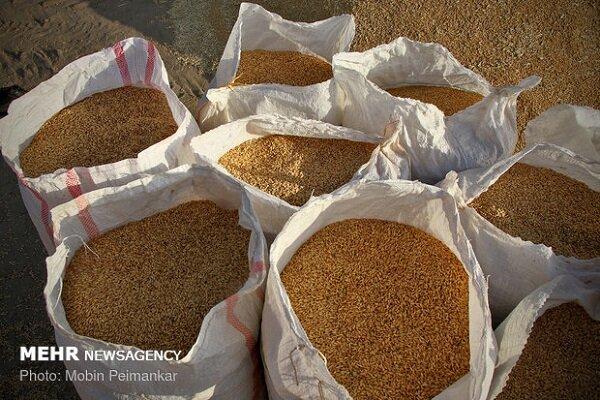 کشف بیش از 100 تن گندم قاچاق در زنجان
