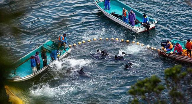 قتل عامهای سنتی حیوانات در جهان (+عکس)