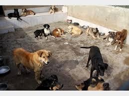 افشاگر سگ کشی در کهریزک تشویق شود نه بازداشت