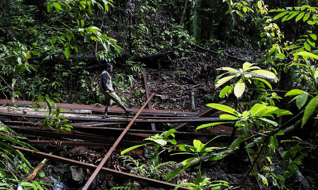 درگیری بر سر منابع/ کشته شدن 160 فعال محیط زیست در سال 2018