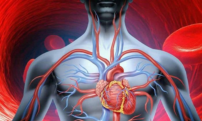5 گزینه طبیعی برای بهبود گردش خون