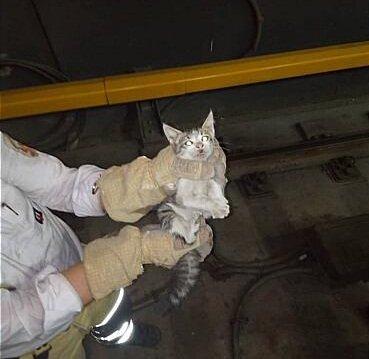 عملیات آتشنشانی برای نجات بچه گربه از تونل مترو مترو