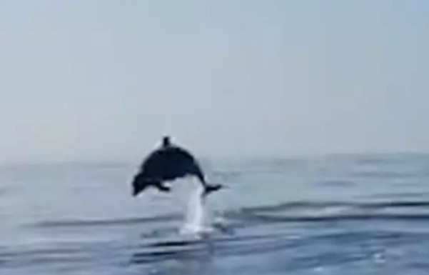 تشکر زیبای یک دلفین از ماهیگیرانی که فرزندش را آزاد کردند (+عکس)