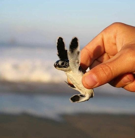ماجرای الهامبخش افرادی که به خاطر محیط زیست جنگیدند (+عکس)