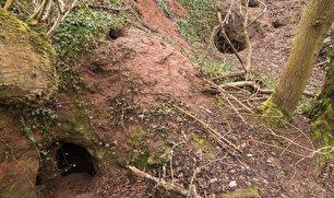 لانه خرگوشی که اسرار شوالیههای معبد را افشا کرد (+عکس)
