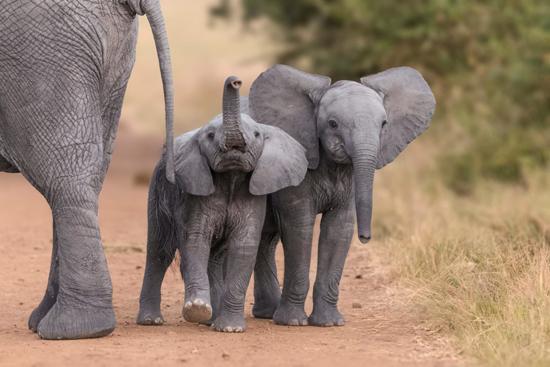 باهوشترین حیوانات روی زمین (+عکس)