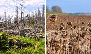 اگر جنگل آمازون کاملا بسوزد چه اتفاقی میافتد؟