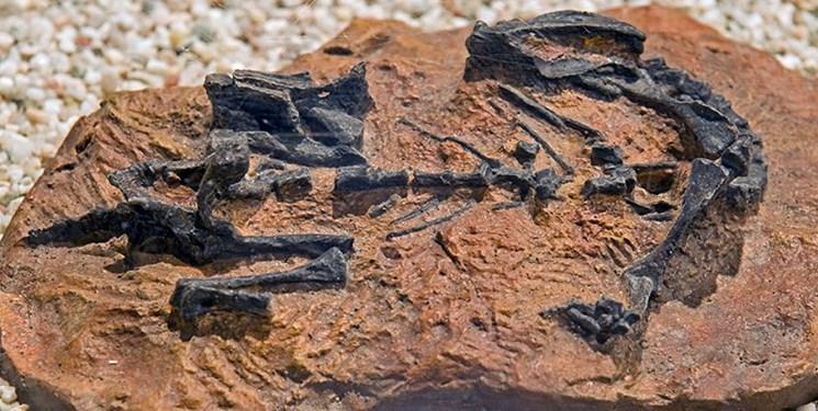 کشف فسیل 100 میلیون ساله گروهی از دایناسورها (+عکس)