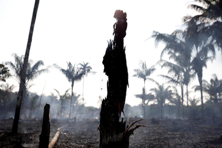 گروه 7: برای کمک به کشورهای آمازون آمادهایم (+عکس)