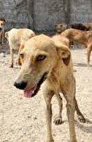 افشاگر سگکشی در کهریزک، تشویق شود نه بازداشت