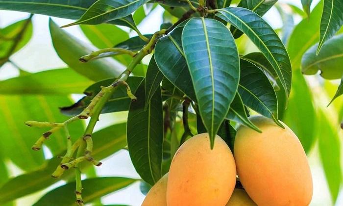 5 فرمول گیاهی برای تثبیت قند خون