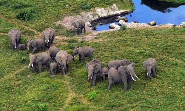 ممنوعیت تجارت جهانی بچه فیل در باغوحش