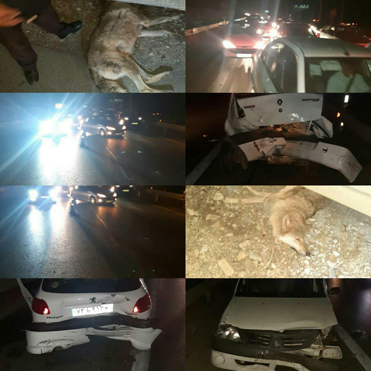 تصادف زنجیرهای در پی ورود گرگ به آزادراه پردیس -تهران (+عکس)