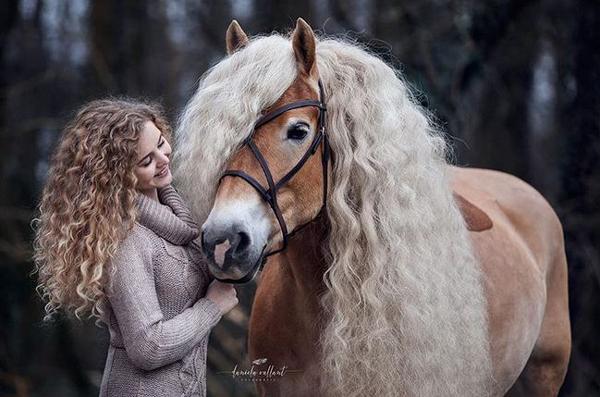 هر دختری به موهای این اسب حسادت میکند! (+عکس)