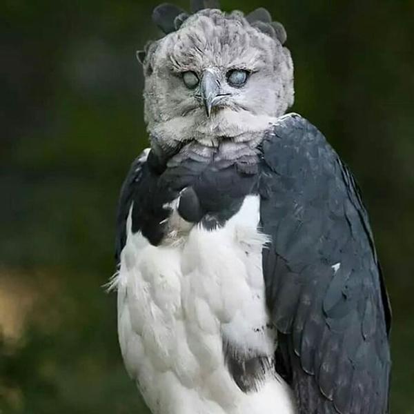 پرنده عظیمالجثهای که باور نمیکنید واقعی باشد! (+عکس)
