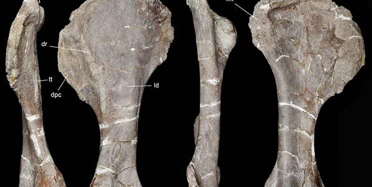 کشف فسیل 96 میلیون ساله یک دایناسور (+عکس)