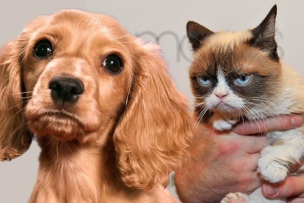 آیا گربه ها می توانند از غذای سگ بخورند؟