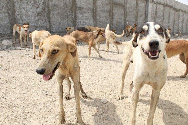 بررسی پیشنویس دستورالعمل نظارتی کنترل جمعیت سگهای بدون صاحب