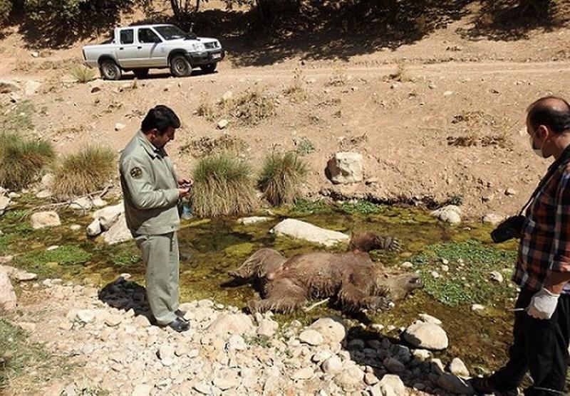 بازداشت عامل کشتار خرس مشگینشهر