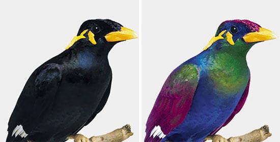 پرندهها دنیا را چگونه میبینند؟ (+عکس)