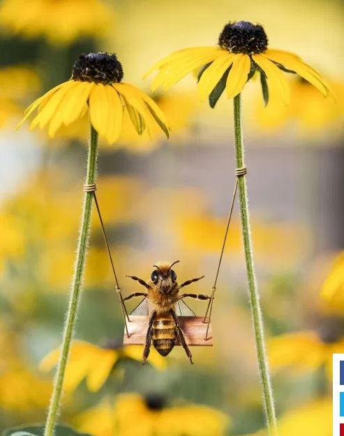 محبوب ترین زنبور عسل در اینستاگرام (+عکس)
