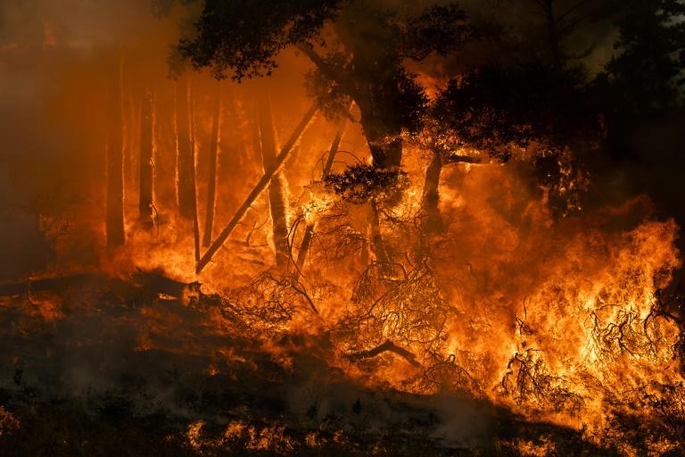 آتشسوزی کالیفرنیای آمریکا: هزاران نفر آواره، یک میلیون نفر در خاموشی (+عکس)