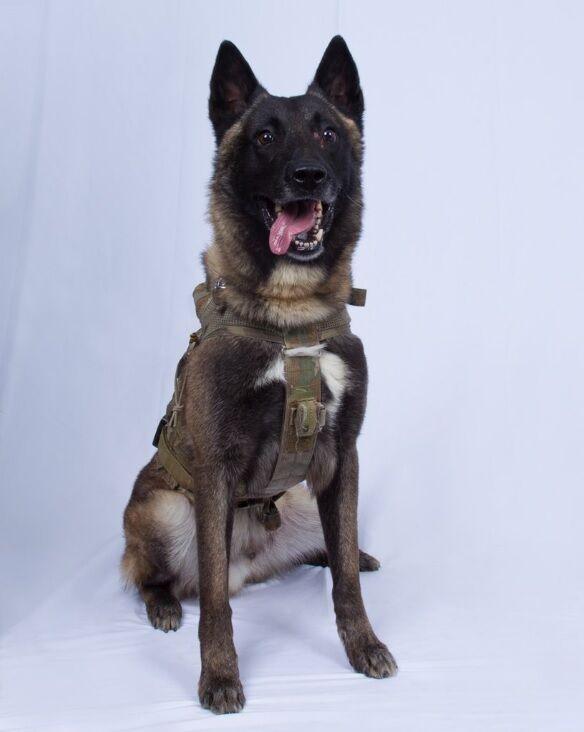 سگ یابنده ابوبکر البغدادی (+عکس)