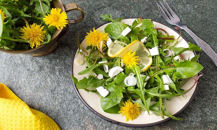 15 گیاه دارویی ضد ویروس