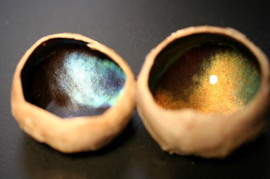رنگ چشم گوزن شمالی در هر فصل تغییر میکند! (+عکس)