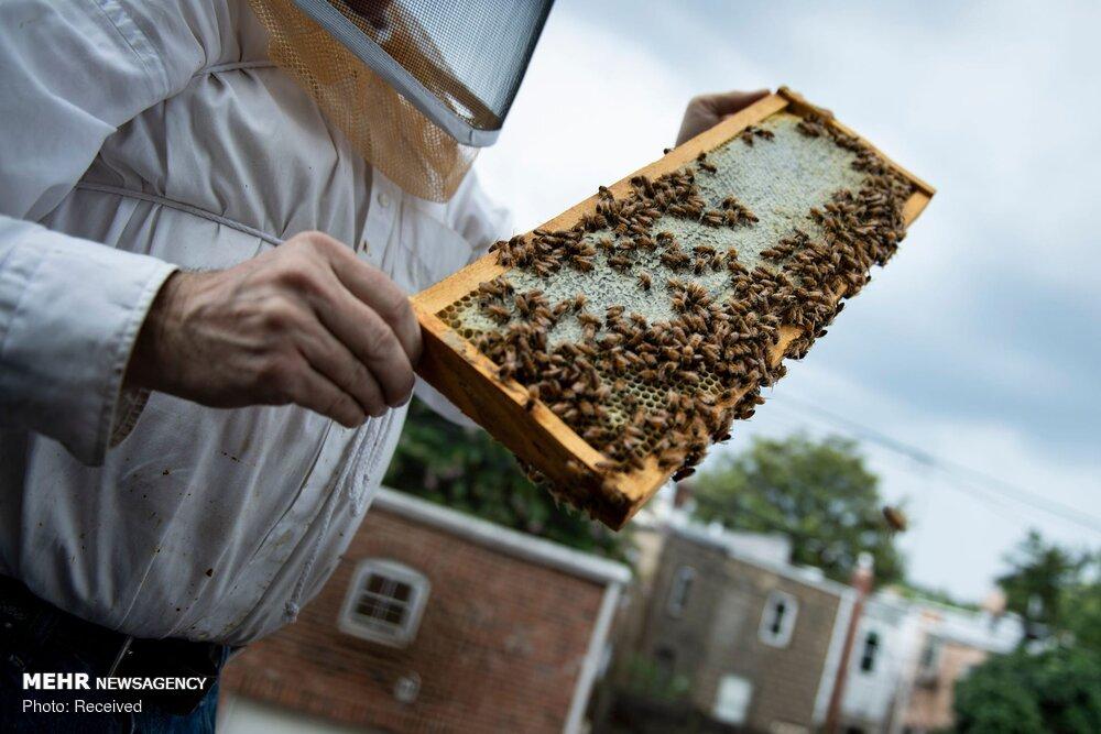 بازار در اشغال عسلهای تقلبی و مشکلات زنبورداران