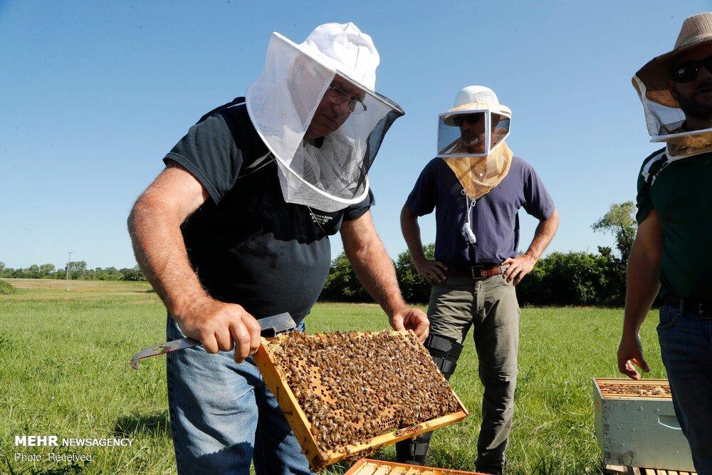 بازار در اشغال عسلهای تقلبی