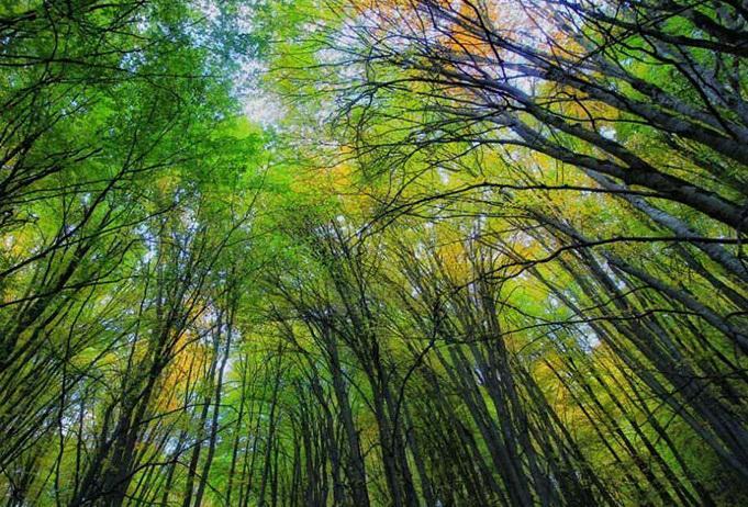 برگزاری جشن ثبت جهانی جنگلهای هیرکانی ١٨ آذر در مازندران