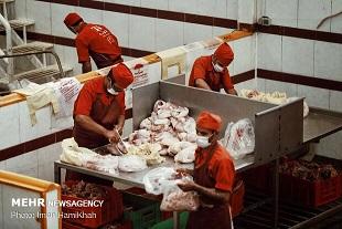 تعطیلی ۵۷ کشتارگاه مجهز در کشور
