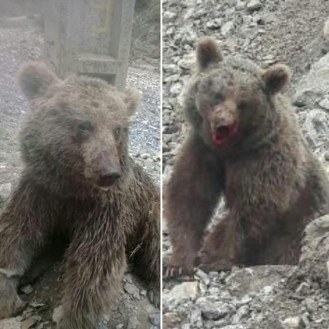 اعتراض محیطزیست سوادکوه به تبرئه دو نفر که