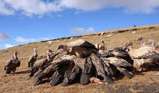 دفن آسمانی تبتیها