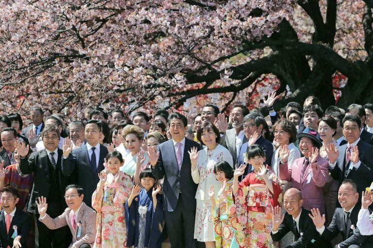 جشن تماشای شکوفه های شینزو آبه