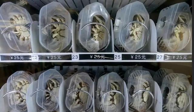 دستگاه فروش خرچنگهای زنده