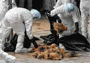 زنگ خطر آنفلوآنزای پرندگان در لرستان به صدا درآمده است؟