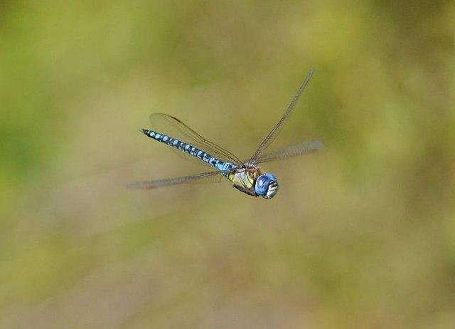 آلودگی نوری عاملی مهم در کاهش جمعیت حشرات