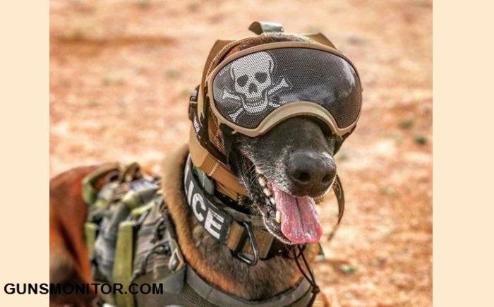 پوشش محافظ گوش؛ ابتکار ارتش آمریکا برای سگ های نظامی(+تصاویر)