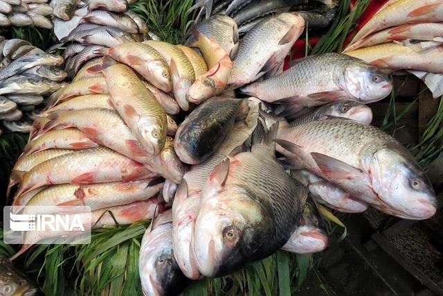 ماهیهای فاسدی که سر سفره مردم نرفت