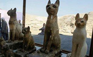 رونمایی بیش از 70 شیر و گربه مومیایی شده در مصر (+عکس)