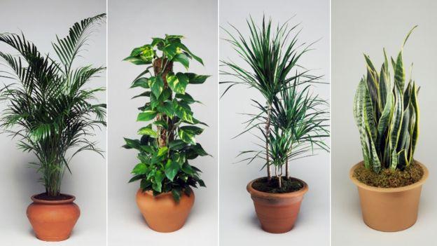 5 روش برای بهبود کیفیت هوا در خانه