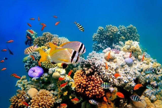 ترمیم صخرههای مرجانی با گول زدن ماهیها!