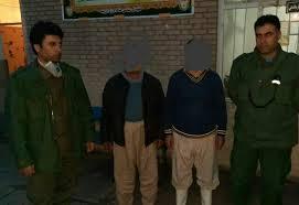 بازداشت عوامل کشتار خرس قهوه ای در ارومیه